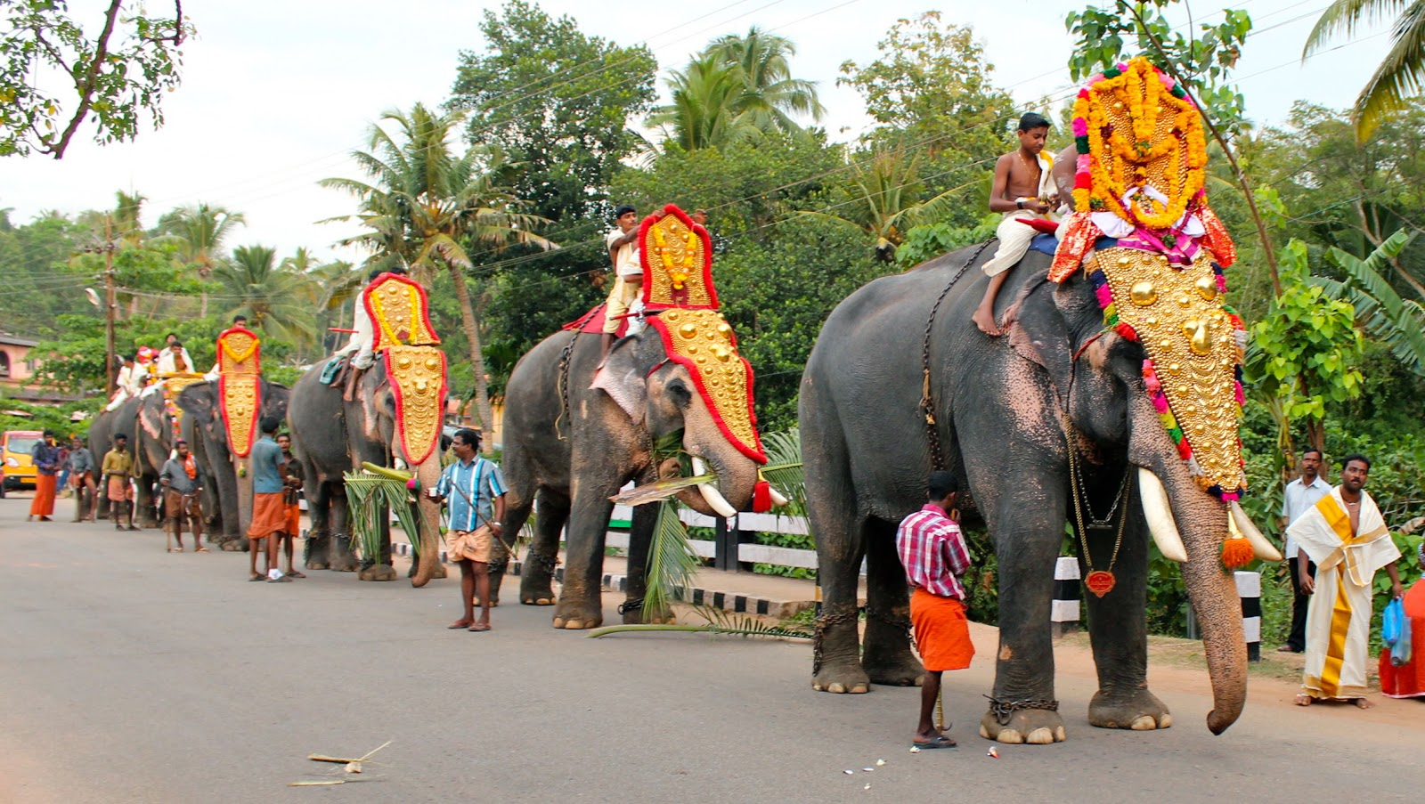 Kerala Special Package Worldescape Tours All elephant png images are displayed below available in 100% png transparent white background for free download. worldescapetours